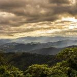 Brazil's Cerrado Forests Won't Be Saved by Corporate Pledges on Deforestation