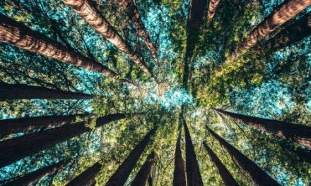 The Circular Economy: Building an Economy on the Template of Nature